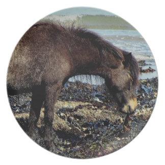 Södra Devon Dartmoor ponny som tycker om äta Tallrik
