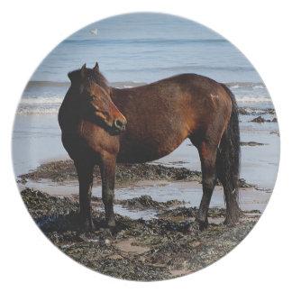 Södra Devon Dartmoor ponnyanseende på strand Tallrik