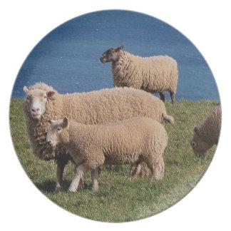 Södra Devon får och Lambs Grazeing på kusten Tallrik