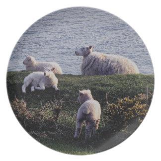 Södra Devon får och Lambs på den avlägsna kusten Tallrik