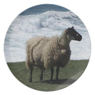 Södra Devon får på vildkusten Tallrik