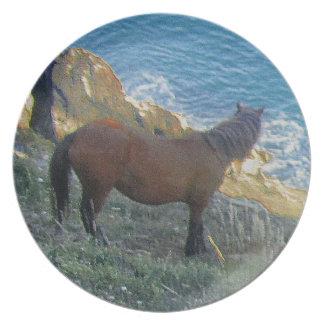 Södra Devon kustenDartmoor ponny tittar hav Tallrik