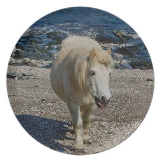 Södra Devon Shetland ponny som går på avlägsen Tallrik