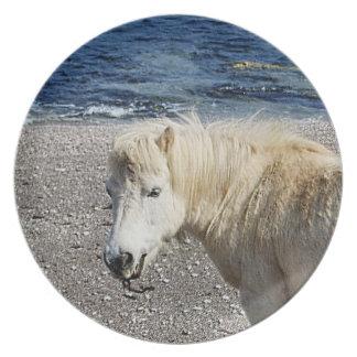 Södra Devon Shetland ponny som tycker om stranden Tallrik