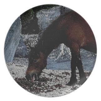 Södra devon strandDartmoor ponny som slickar Tallrik