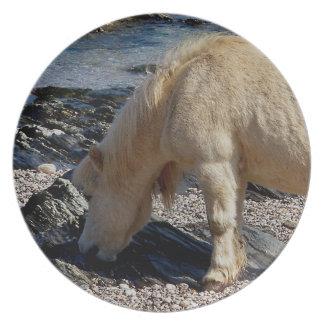 Södra Devon strandShetland ponny som äter sjögräs Tallrik