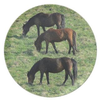 Södra Devon tre Dartmoor ponnyer Grazeing fodrar Tallrik