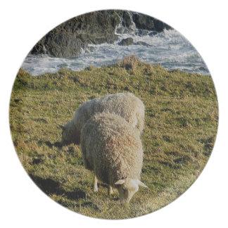 Södra Devon två får Grazeing på vildkusten Tallrik