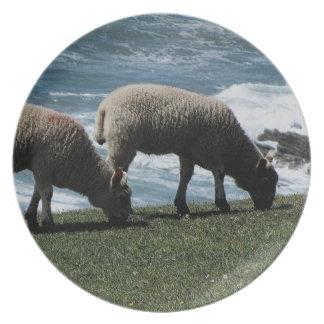 Södra Devon två Lambs Grazeing på vildkusten Tallrik