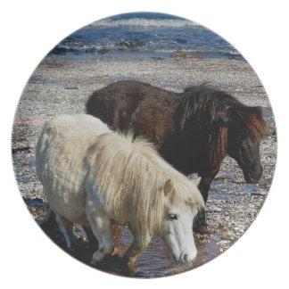Södra Devon två Shetland ponnyer på avlägsen stran Tallrik