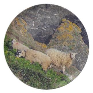Södra får Grazeing för Devon kusten tre på stenar Tallrik
