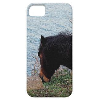 Södra sniffa för den Devon kustenDartmoor ponnyn iPhone 5 Hud