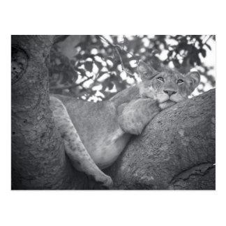 Södra - vila för afrikan som är lejont vykort