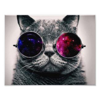 solglasögonkatt fototryck