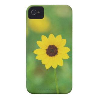 solig dagblomma iPhone 4 Case-Mate fodraler