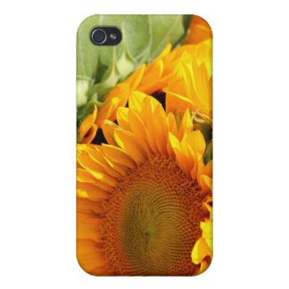 Solig grupp iPhone 4 cover
