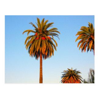 Solig Kalifornien palmträdvykort Vykort