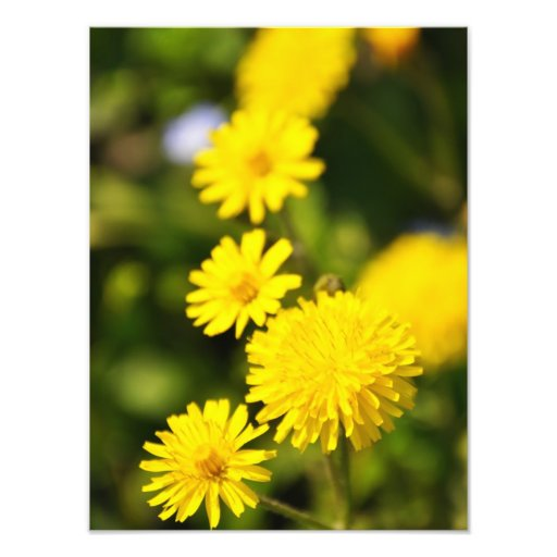 Soligt gula blommorfoto fototryck