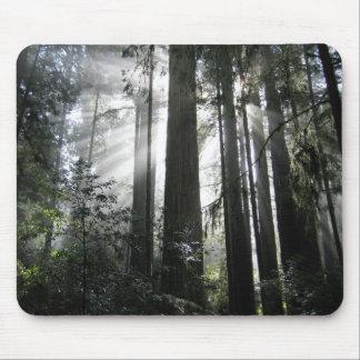 Solljus till och med redwoodträden musmatta
