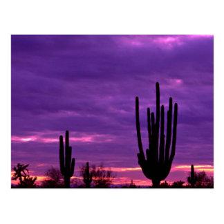 Solnedgång Scottsdale, Arizona Vykort
