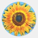 Solros klistermärkear runda klistermärken
