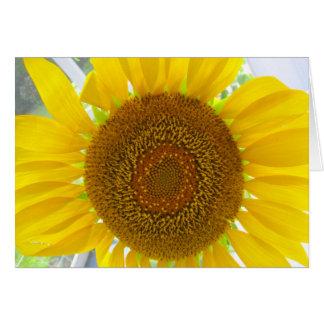 Solros Photocard Hälsningskort