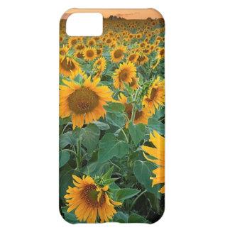 Solrosfält i Longmont, Colorado iPhone 5C Fodral