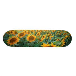 Solrosfält i Longmont, Colorado Skateboard Bräda 19,5 Cm