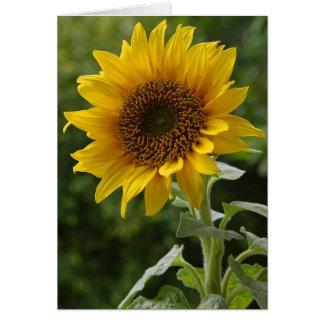 Solrosor i fält hälsningskort