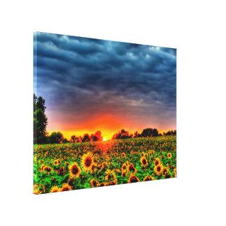 solrosor på skymningen canvastryck