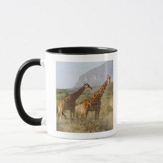 Somalisk giraff, Reticulated giraff, Giraffa