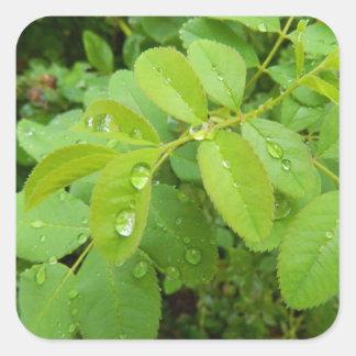 Sommaren regnar på växter fyrkantigt klistermärke