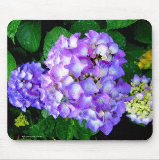 Sommarvanlig hortensia musmatta