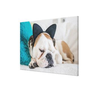 Sömnig hund för Getty bilder | med