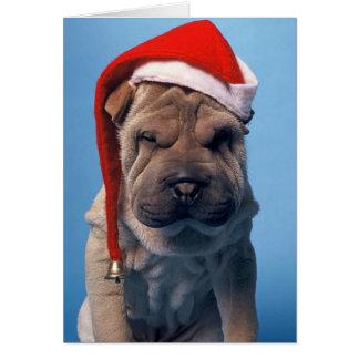 Sömnig hund för Shar Pei x mas Chrstmas Hälsningskort