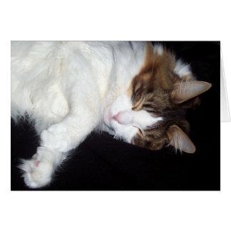Sömnigt katthälsningkort hälsningskort