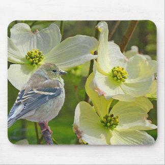 """Songbird """"för Dogwoodbesökare"""" Finch - Musmatta"""