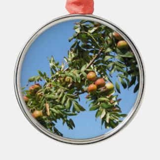 Sorbs i fruktträd. Tuscany italien Julgransprydnad Metall