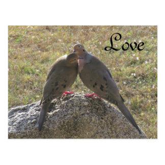 Sörjande vykort för duvafågelkärlek