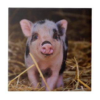 Söt gullig gris liten kakelplatta