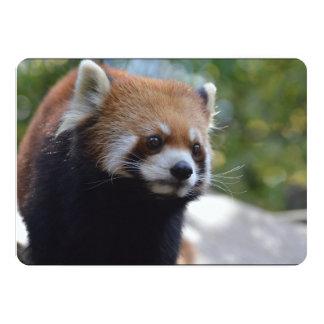 Söt röd Pandabjörn 12,7 X 17,8 Cm Inbjudningskort