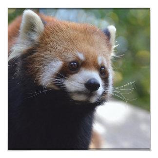 Söt röd Pandabjörn Fyrkantigt 13,3 Cm Inbjudningskort