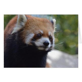 Söt röd Pandabjörn Hälsningskort