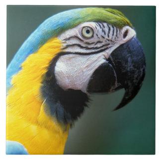 South America Brasilien, Iguacu Natioanl parkerar, Kakelplatta