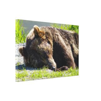 Sova den alaskabo grizzlyen canvastryck