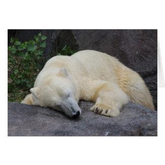 Sova den polara björnen OBS kort