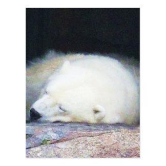 Sova den polara björnen vykort