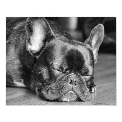 Sova det franska bulldoggfototrycket fotografiska tryck