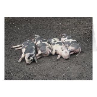 Sova för grisar OBS kort