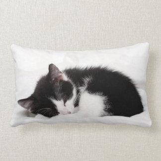 Sova för kattunge för 9-Vecka gammalt (felisen Lumbarkudde